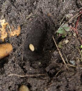 Seed 11